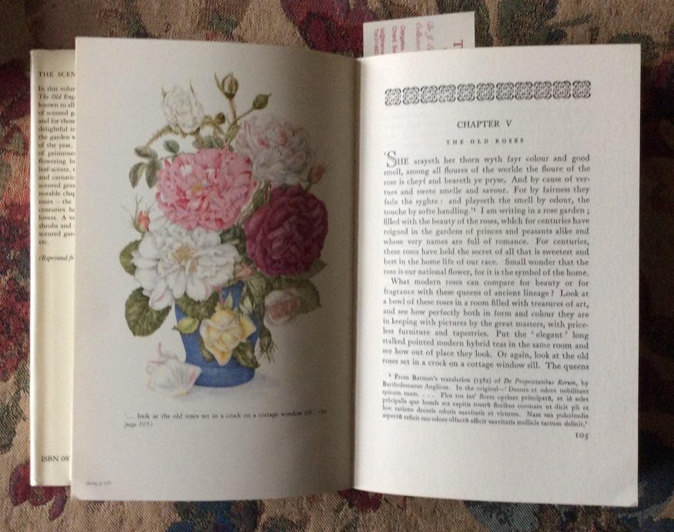 A chapter on Old Roses in Eleanour Sinclair Rohde's