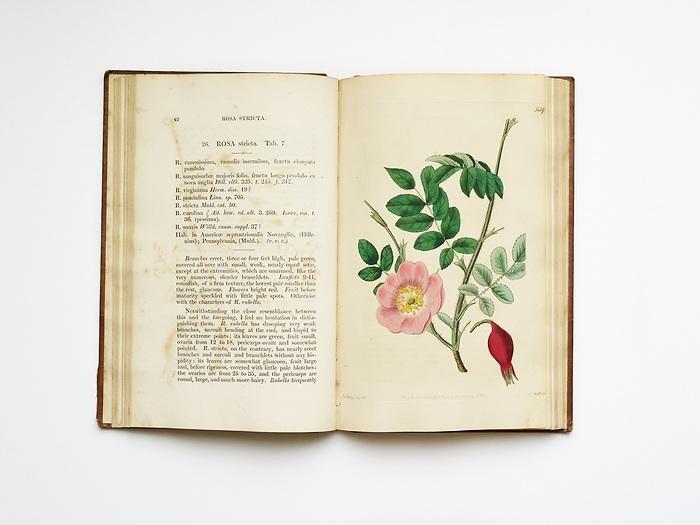 Rosarium Monographia