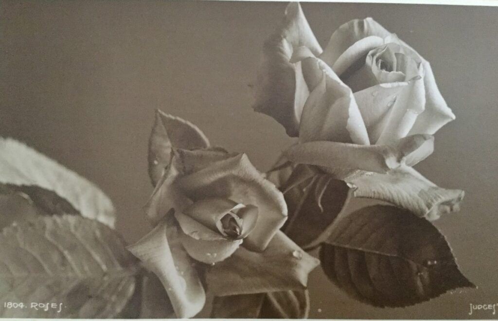 A postcard showing a black and white photo of roses.