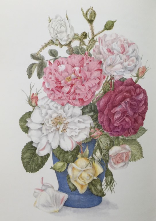 Painting of old roses by Patricia Dale taken from 'The Scented Garden'.