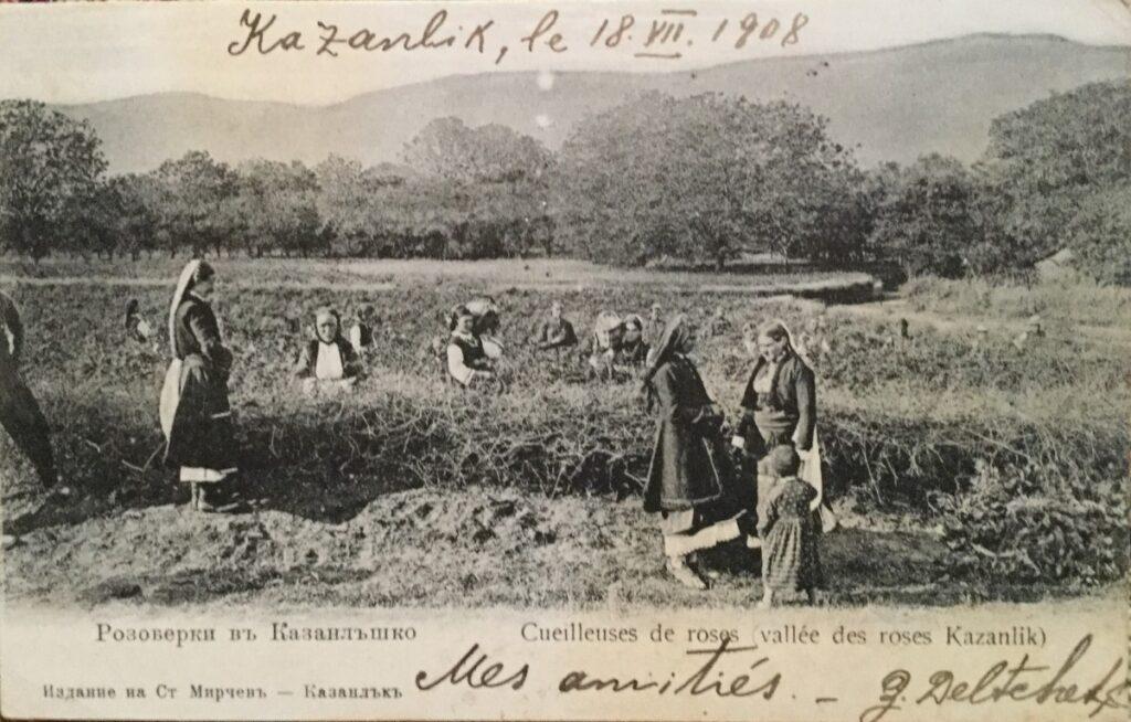 Postcard of rose harvest, Bulgaria