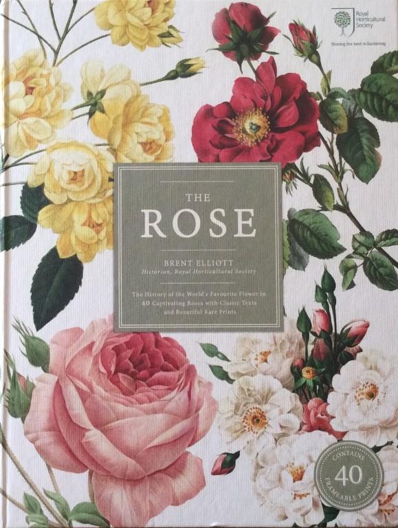 The Rose by Brent Elliott