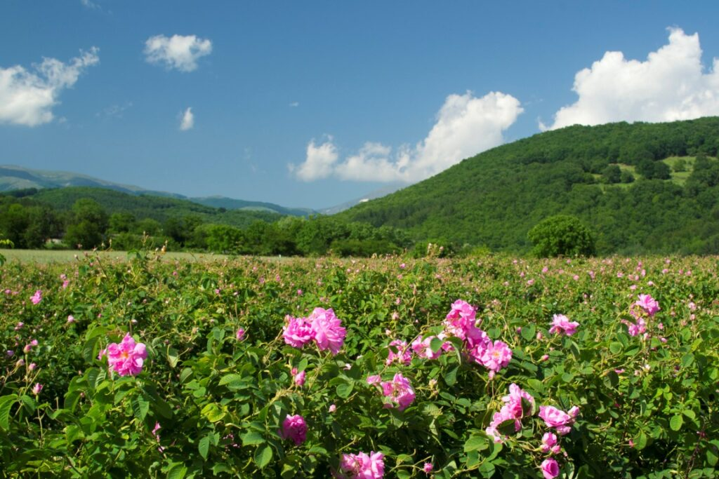 The Valley of the Rose, Bulgaria